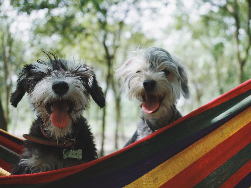 5-aplicativos-que-conectam-animais-abandonados-a-pessoas-que-querem-adotar